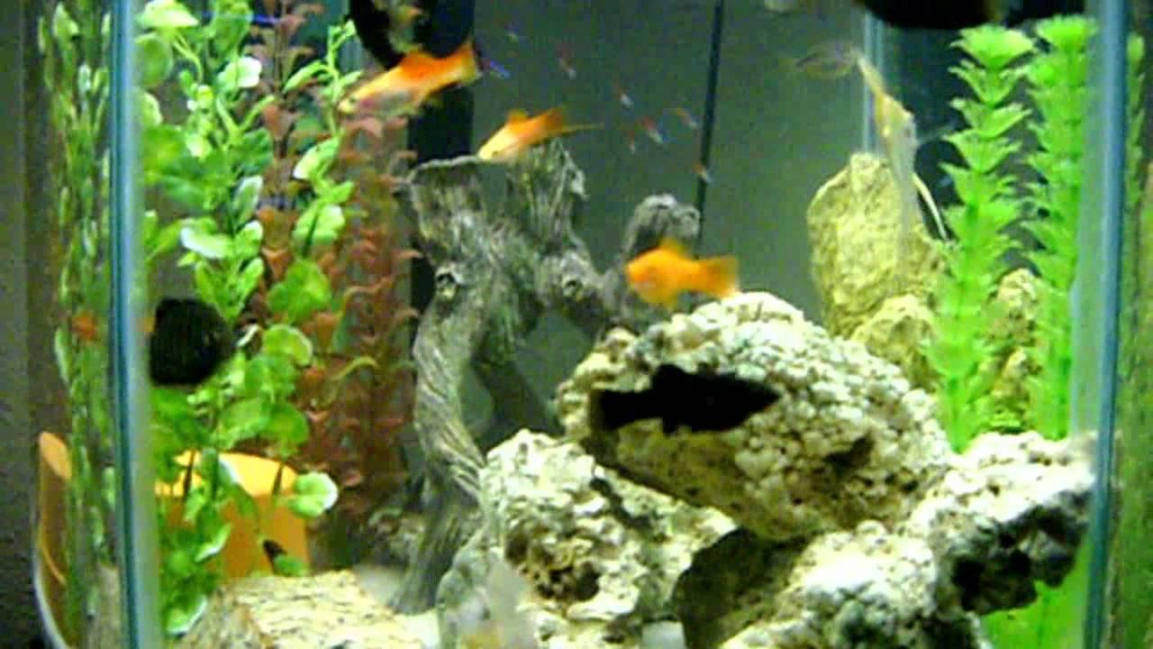 how to start amarine fish tank