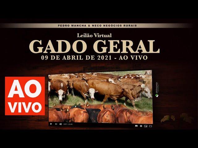 IV LEILÃO VIRTUAL GADO GERAL