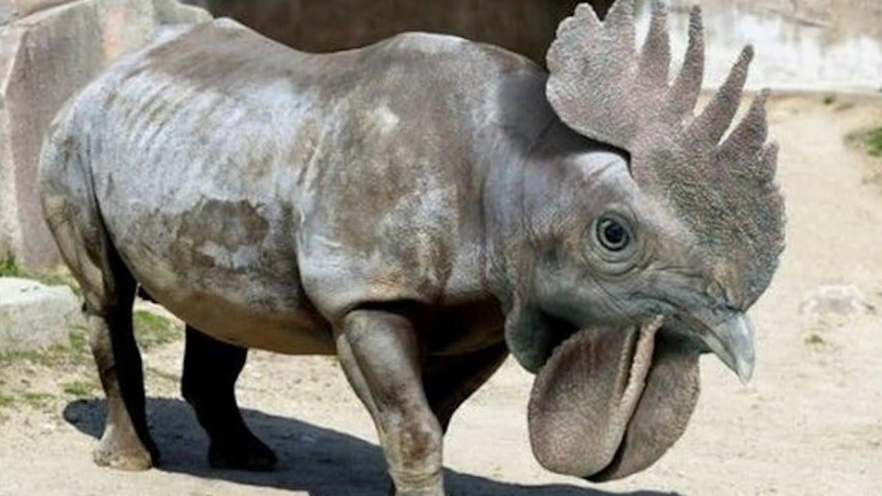 Самые загадочные животные мира