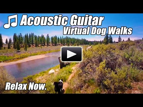 Acoustic Guitar Instrumental Virtual Walking Tour DOG WALKS