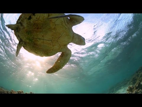 Great Barrier Reef Travel Video Guide, Queensland Australia