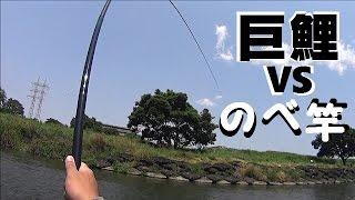 のべコイ 巨鯉にのべ竿で挑んで引きずられてみた monster carp vs 8m reelless rod