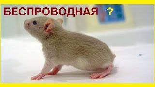Как я выбирал компьютерную мышь(Как выбрать мышку для компьютера? Какую мышь выбрать: ➀ большую или маленькую, ➁ обычную или анатомическую,..., 2015-04-16T01:08:55.000Z)