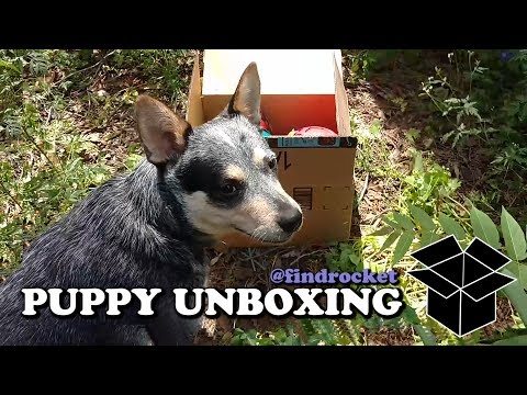 Puppy Unboxing #10 - Hol-ee & Jolly Ball