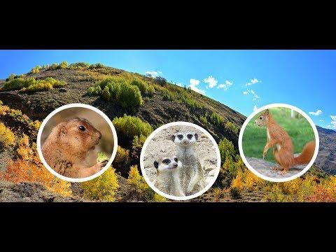 Photoshop CS6: Comment recadrer l' image dans 1 cercle ...
