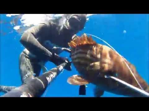 spearfishing in Greece June 2014
