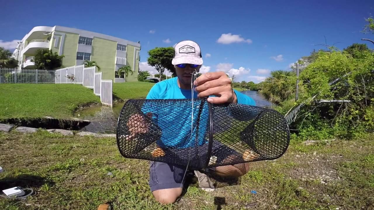 how to catch live bait (freshwater fishing) - youtube, Fishing Bait