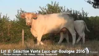 Lot 8 Sélection vente Lucs-Sur-Boulogne 2016 by Simon Genetic