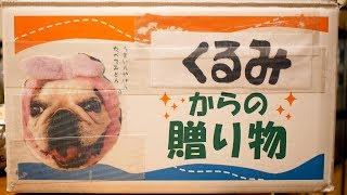 くるみちゃんからのお届け物(愛媛)