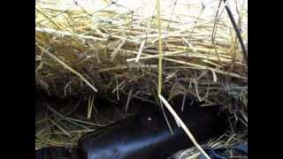 охота на гуся.wmv
