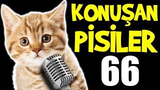 Konuşan Kediler 66 - En Komik Kedi ları