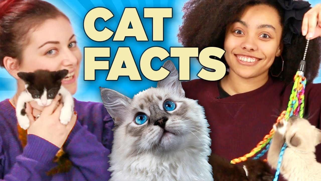 cat-lovers-learn-amazing-facts-about-cats-while-playing-with-kittens