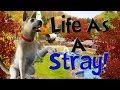 Let's Play The Sims 3 Life As A Stray! Part 2!