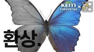 이 나비의 날개에는 파란색 물질이 들어있지 않습니다.(…