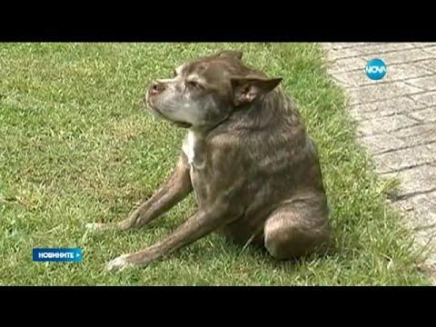 Квазимодо – най-грозното куче на света - Новините на Нова (27.06.2015г.)