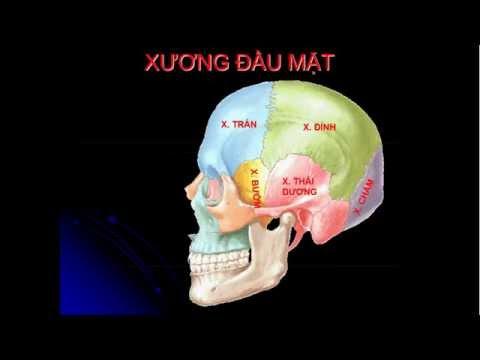 Cấu tạo Xương mặt, xương đầu, xương cổ ở người