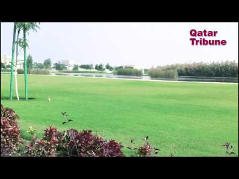 Ashghal's Man-made forest