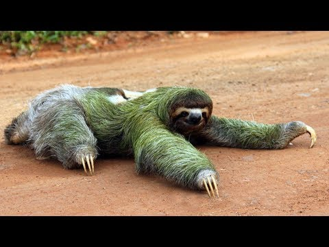 Top 10 Slowest Animals In The World |