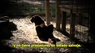 Pantera negra / Black Panther (documental)