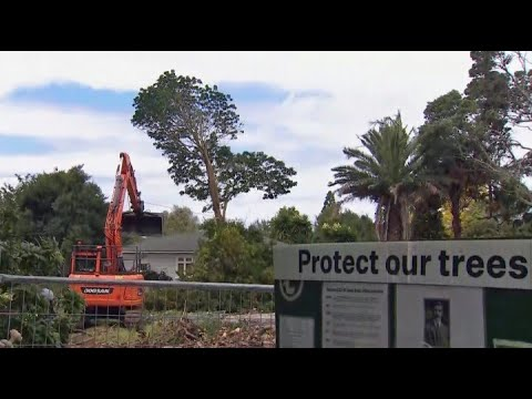 Tree protestors make Auckland court appearance over long-running battle with developer