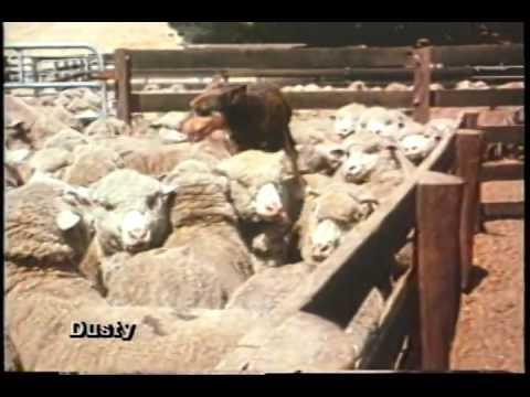 Dusty Trailer 1984