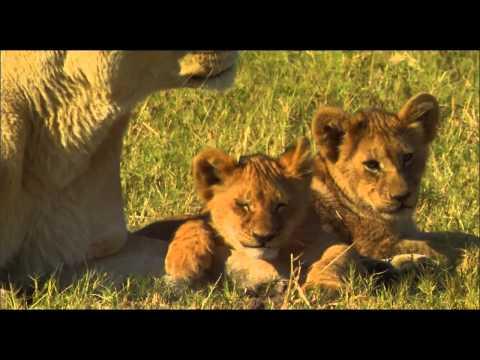 The Last Lions 2011    HD