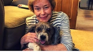 woman finds abandoned senior dog in yard — sees heartbreaking note jumps into action