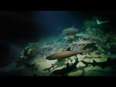 Diver at Cocos Island