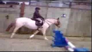 Smarty Strawberry Roan Pony February 2008