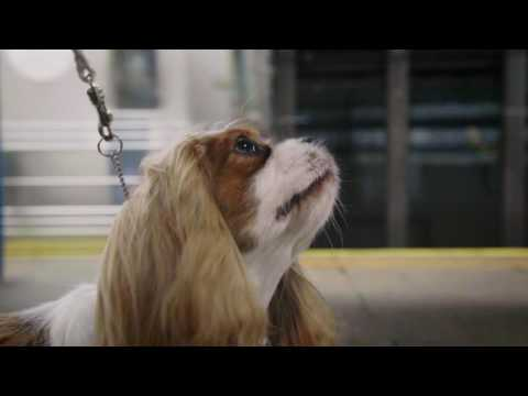 Westminster Dog Show: Cavalier King Charles Spaniel takes a trip on the Subway