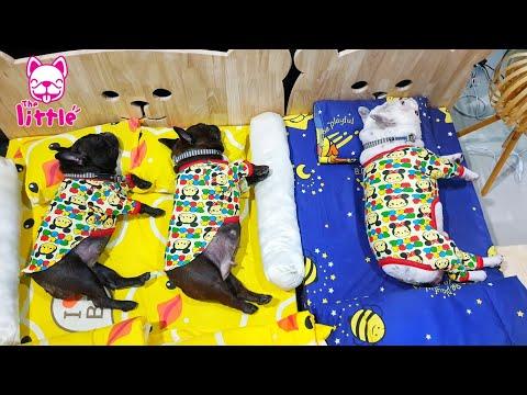 ดุ๊กดิ๊กๆต่อคิวขึ้นเตียงใหม่ |เตียงน้องหมา สามารถสั่งซื้อได้ที่เพจ The Little