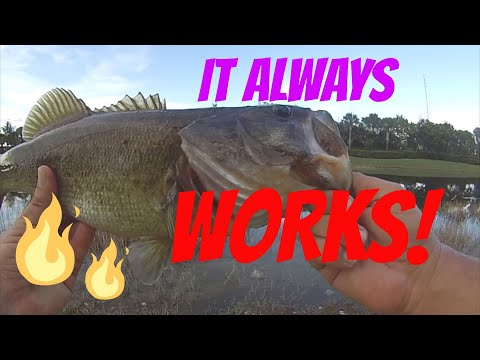 Fishing With Live Shiners For Bass - The Best Trick You Need To Know!