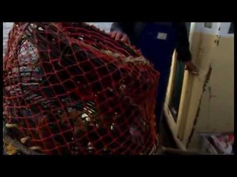 Fisheries Stock Assessment Modelling Video 03 - Recruitment