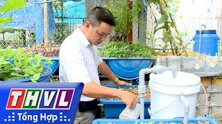 THVL | Nông nghiệp bền vững: Trồng rau - nuôi cá khép kín, giải pháp tốt cho nông nghiệp đô thị