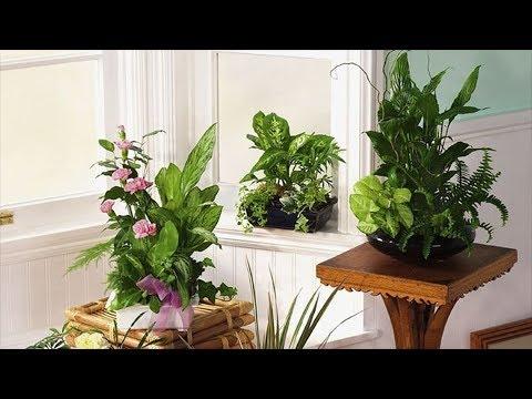 Вопрос: Какие растения лучше всего подходят для дома?
