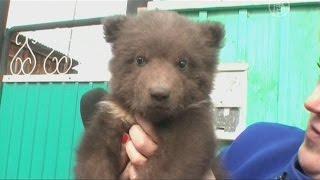 Семья из Иркутской области приютила медвежонка (новости)