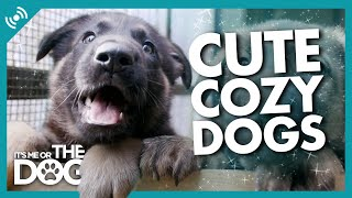 Relaxing Cute and Cozy Dogs 24/7 Live Stream to FIX 2021
