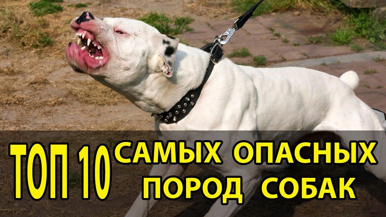 фотки самых опасных собак