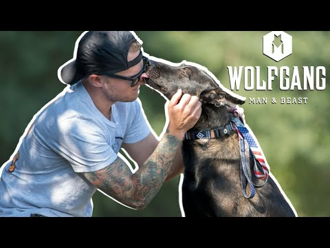 Martingale Dog Collar Review- Wolfgang Man & Beast