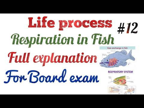 Respiration In Fish  Life Process Full Explanation Biology Chapter One Life Process #12