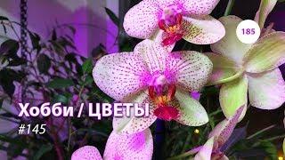 185#145 / Хобби-Цветы / 07.2019 - ЛЕРУА МЕРЛЕН (ХИМКИ). ОБЗОР