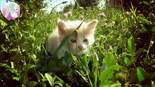 Все наши КОТЯТА КОТЫ и КОШКИ Животные Котята играют Кошка и котята Деткое видео #AlisebabyTV