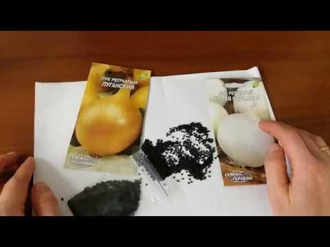 Как выглядят семена лука