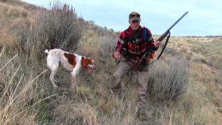 Thanksgiving Partridge Hunt 2016