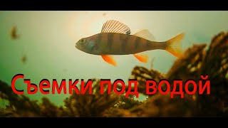 Ищем крупную рыбу с помощью подводной камеры на таежном пруду