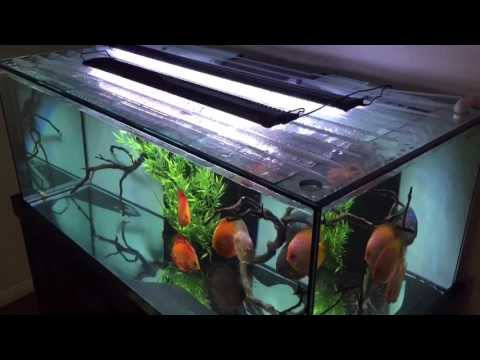 unboxing new led light 48 for my discus tank youtube. Black Bedroom Furniture Sets. Home Design Ideas