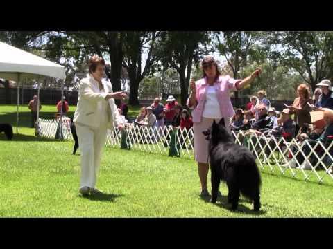 Belgian Sheepdog Club of America 2011 National Specialty Breed DVD Demo