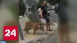 В Самаре на улице выгуливали тигра