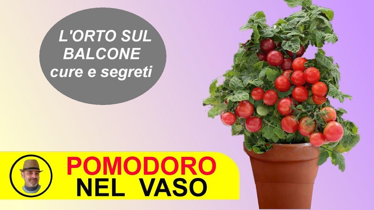 Come Coltivare Pomodori Sul Balcone il pomodoro sul balcone come coltivarlo e le cure