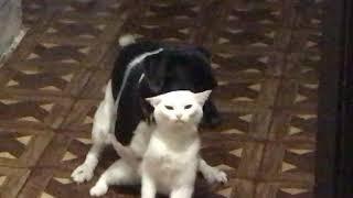 Жесткое порево 18+ собака наказывает кошку за наглость
